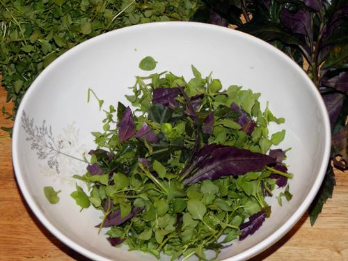 Okinawa spinach and chickweed in a salad bowl
