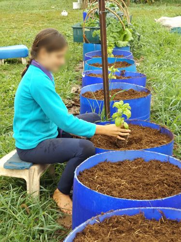 Planting seedlings into compost