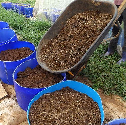 covering soil with a layer of chicken litter