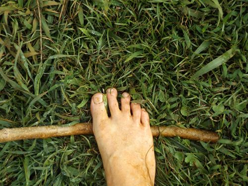Persons foot on a thin branch on the grass