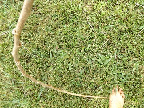 bending a branch while standing on one end of it