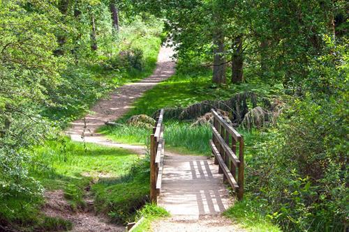 Bridge and pathway