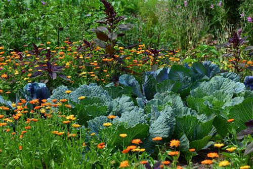 diverse garden with many different food plants and flowers